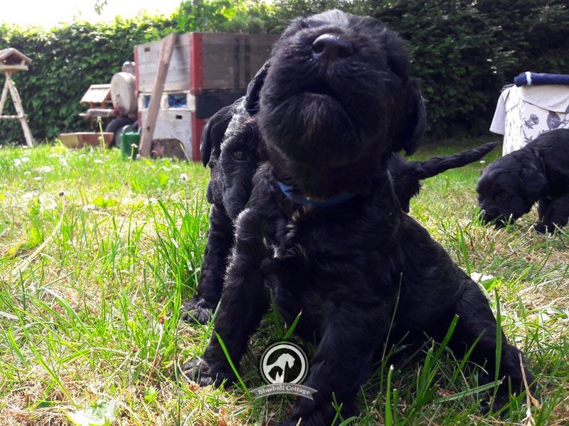 Alvin und Aragon auf der Gartenwiese